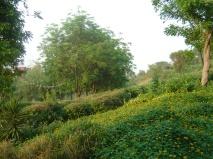 Dense planting on the banks
