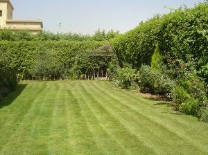 Garden lawn 9:13