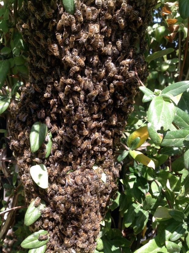 bees close-up