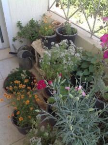 Balcony garden 4.2015