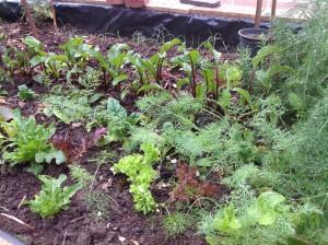 Colourful kitchen garden