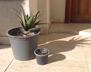 Aloe mother & baby 2 2.16