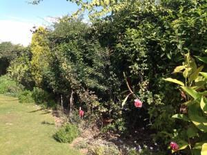 Overgrown border 1.16