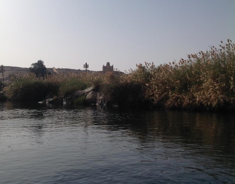 Nile reeds