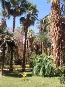 Palms galore...
