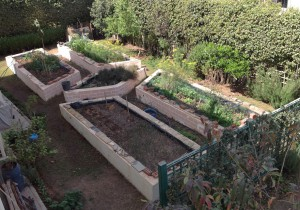 Raised beds aerial view 3.16