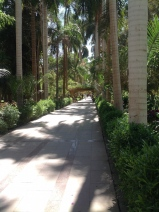 ... and avenues of Royal palms originating in Cuba