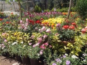 Flower show colours