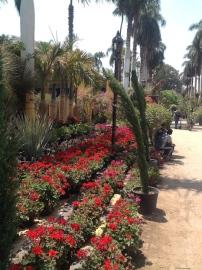 Flower show vistas 6...4.16
