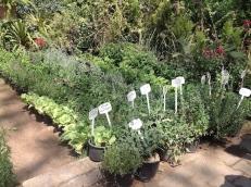 Herbs 4.16