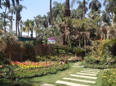 Nursery display by the palms 4.16