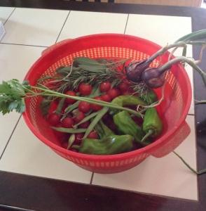 Harvest 6.16
