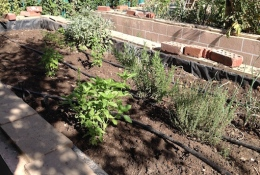 Herbs bed 2 6.16