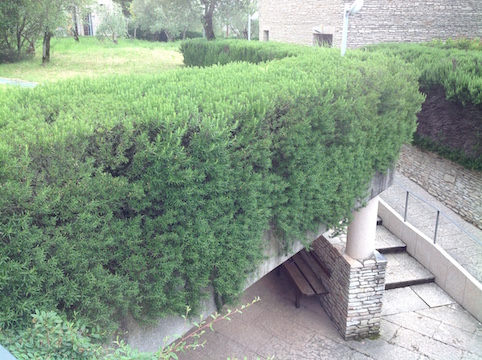 Rosemary in Sirmione  5.16