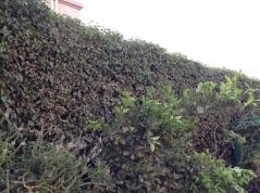 Hedge 7.16