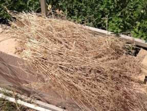 Drying the compost ii. 8.16