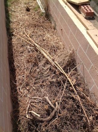 Drying the compost iii. 8.16