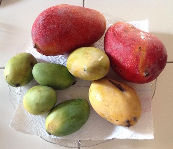 Mango selection