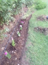 On goes the compost and in go the Vincas