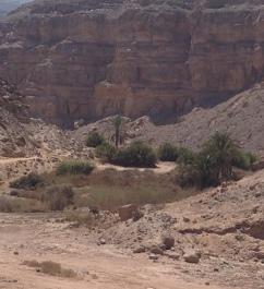 desert-oasis
