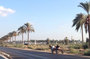 Along the Alex-Cairo road