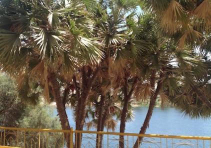 aswan-doum-palms