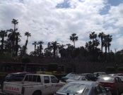 cairo-skyline-w-palms