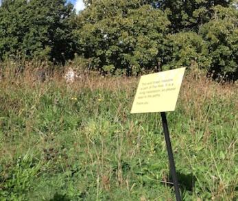 wild-flower-meadow