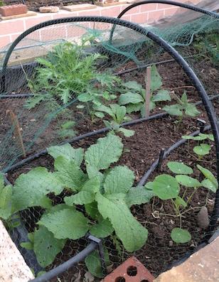 self-seedlings-rb3-11-16