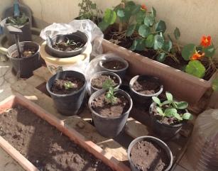 Balcony pots general 3.17