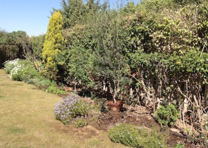 herbaceous-border-part-done-3-17
