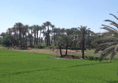 Fayyum farms