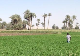 In Fayyum's fields