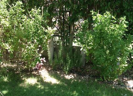 Back border sunlight thru trees