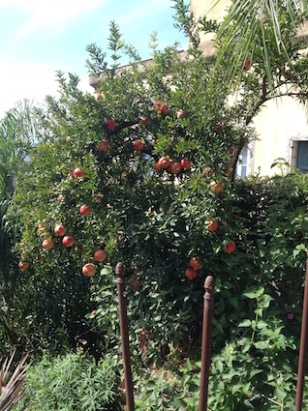 Casa Cuseni pomegranate copy