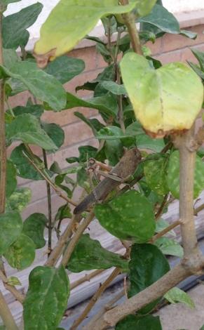 Locust 9.17