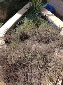 RB5 herbs 9.17