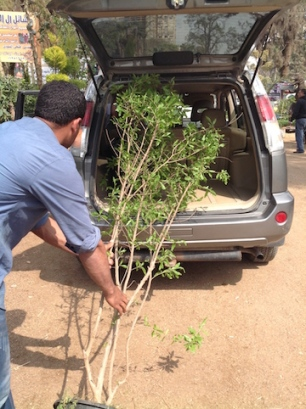 Transporting the pomegranate 2