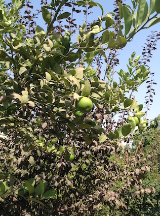 Limes 1 10.17