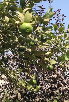 Limes 2 10.17