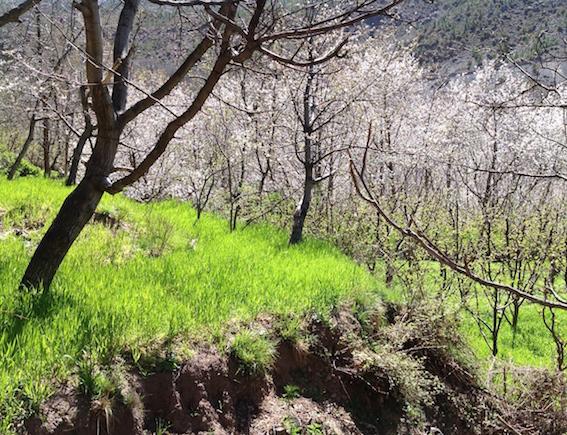 Mountain greenery + blossom