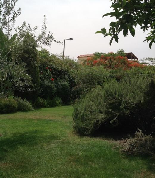 Garden view 5.18