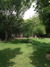 Lawn and fruit trees 5.18