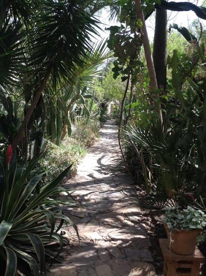 Pathway thru greenery