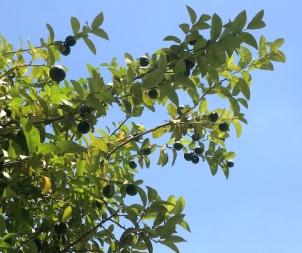 Lemons 6.18