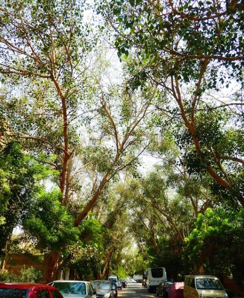 Between the trees Maadi 9.18