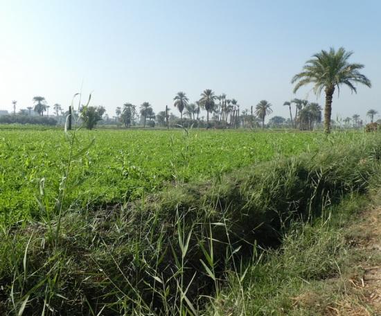 Across the fields Fayyum