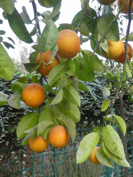 Lemons 11.18